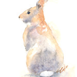 Watercolor Bunny Postcard